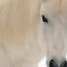 The White Pony by Wayne King