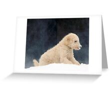Cold Nose Greeting Card