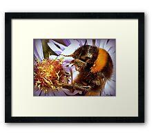 Somethings Bee-n Here Bee-fore Me! Framed Print