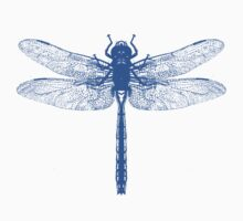 Blue Dragonfly by Zehda
