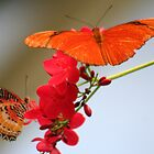 Two Butterflies on a Geranium Stalk by Laurel Talabere