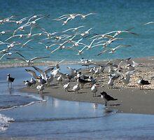 Birds by noffi