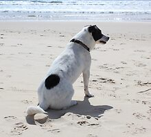 Dog on beach by franceslewis