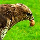 Chicken Again by Trevor Kersley