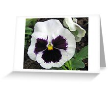 Pansy Bold and Beautiful Greeting Card