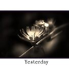 Yesterday  by Elaine  Manley