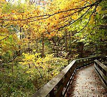 October Stroll by BackHomeImages