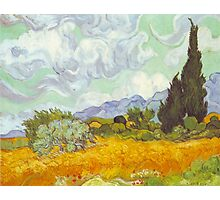 'Cornfield With Cypresses' by Vincent Van Gogh (Reproduction) Photographic Print