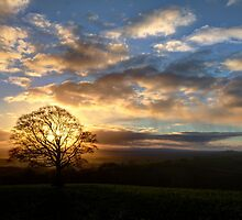 Lone hill top tree at sunset by peteton