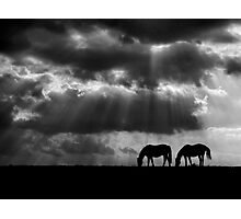 Evening Rays Photographic Print