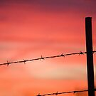 Beautiful Barbed Wire by Appel
