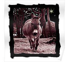 little donkey ... long road ahead ...  Poster