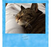 Purr Chance to Dream Cat Photographic Print