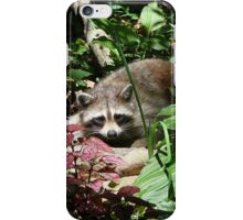 CATCHING A FEW RAYS iPhone Case/Skin