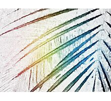 Palm Fronds 1 Photographic Print