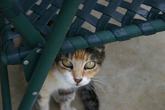 Miss Kit Kat by MMerritt