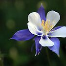 The Glory of the Columbine by Nikki Trexel