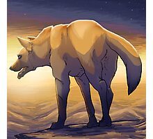 Desert Dog Photographic Print