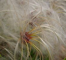 fluff sprinkler by leigh banks