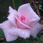 Baby Pink Rose by lillithtitania