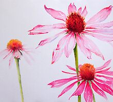 Pink and White by Ruth S Harris
