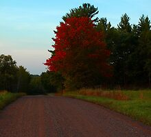 Red Down The Road by babyangel
