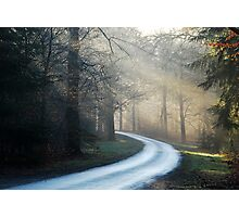 Touring through the hazy morning forest Photographic Print
