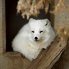 Arctic Chill by starbucksgirl26