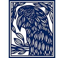 Debell Parrot Blue White Photographic Print