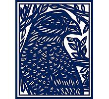 Elhosni Eagle Hawk Blue White Photographic Print