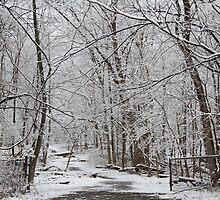 snow 2 by orelusmedia