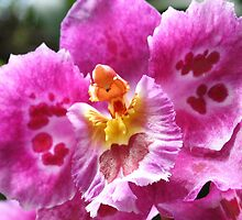Orchid in Shades of Pink by Laurel Talabere