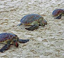 3 Tortoises. by nJohnjewell