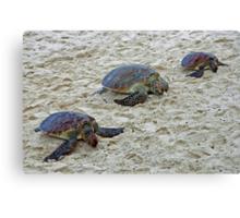 3 Tortoises. Canvas Print