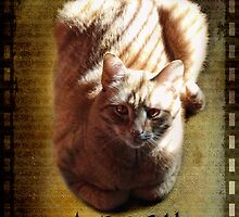 A cat is a poem by vigor