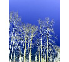 Trees in the Dark Photographic Print