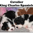 Cavalier King Charles Spaniels by Jenny Brice