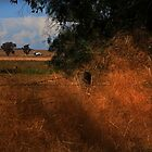 Golden Tumbleweed   by myraj