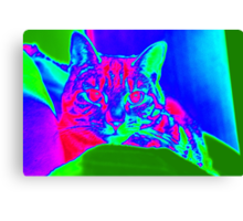 Psychedelic Tabby Haze Canvas Print