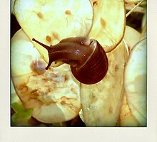 garden snail by poladroid