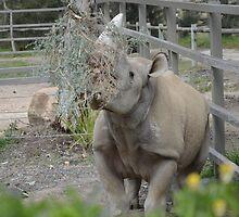 Black Rhinoceros. by nJohnjewell