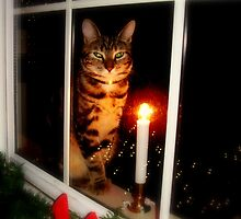 Waiting for Santa Claws.... :)  by Tom Michael Thomas