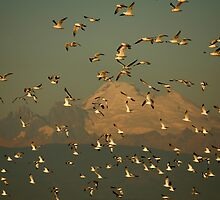 Bird Flock by Olga Zvereva