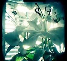 White lilies photograph by gailgriggs