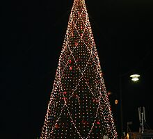 Christmas Tree in Lights by Tarryn Godfrey