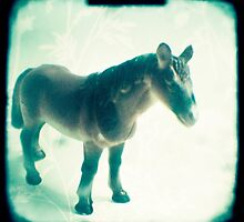 Little horse by gailgriggs