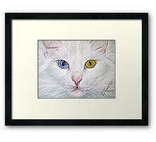 Unbelievable Cat Framed Print