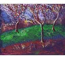 Orchard in blossom Photographic Print