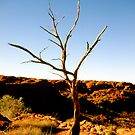 outback tree by Leanne Smith