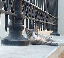 sad cat of greece by lightwild